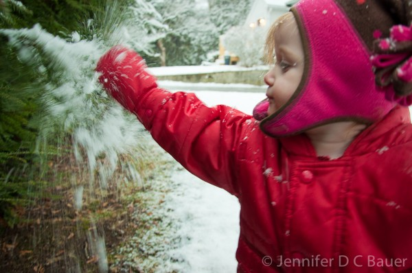 Addie shaking the snow off the branches.