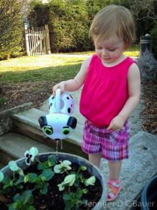 Addie watering pansies with her watering can.