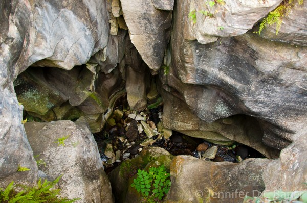 The gorge at Natural Bridge State Park in North Adams, MA.