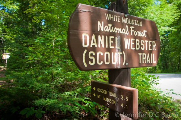 Daniel Webster (Scout) Trail in the White Mountains of N.H.