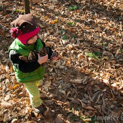 Addie collecting pine cones at Weir Hill in North Andover, MA.