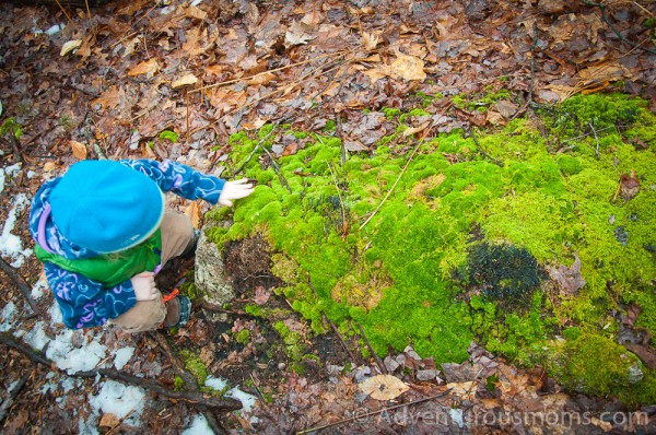 Addie feeling the moss in the Hammond Reservation in Andover, MA