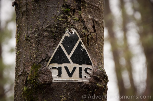 AVIS Trail Marker in the Hammond Reservation in Andover, MA