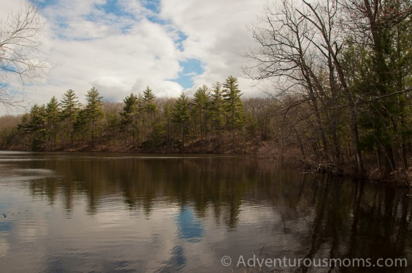 Harold Parker State Forest in Andover, MA