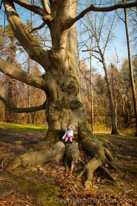 Addie sitting on a giant tree at Osgood Hill in North Andover, MA