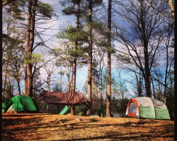 Camping at Harold Parker State Forest in Andover, MA
