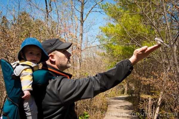 Greg catching a chickadee at the Ipswich River Wildlife Sanctuary