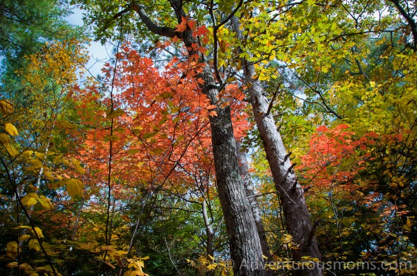 Fall Foliage on West Rattlesnake Mountain in Holderness, NH