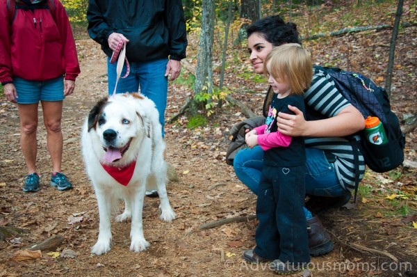 Addie and Rafal hiking West Rattlesnake Mountain in Holderness, NH