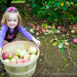 Apple picking at Smolak Farms in North Andover, MA
