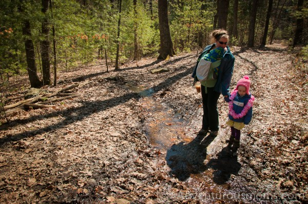 Hiking at Harold Parker State Forest in Andover, MA