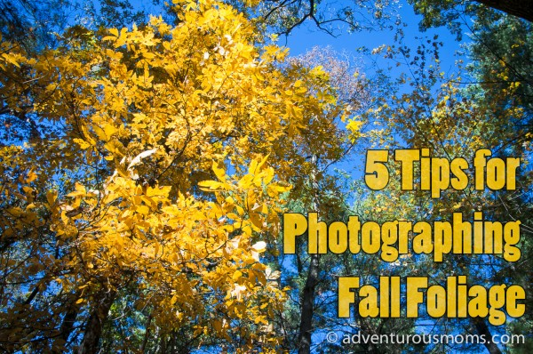 5_tips_for_photographing_fall_foliage_(1_of_1)-5 Tips for Photographing Fall Foliage